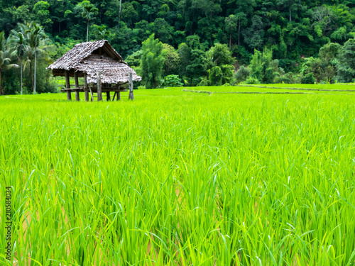 Aluminium Lime groen Top view of green grass of rice terrace located north of thailand