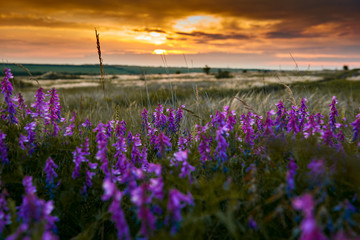 beautiful sunset is in the field, wild flowers and grass, sunlight and dark clouds