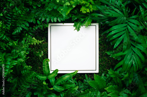 Blank card in fern leaves