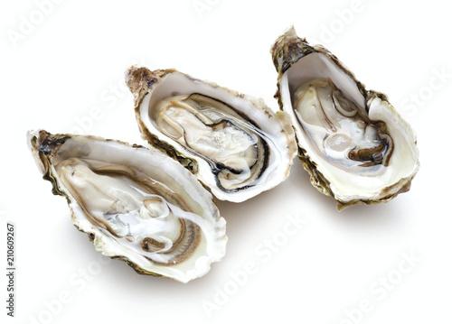 Leinwanddruck Bild set of oysters isolated on white background