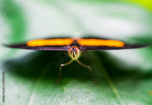 Close up macro photography of a colorful butterfly sitting on a green leaf - 210616402