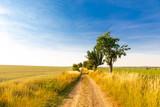 Alter Landweg im Sommer