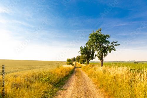 Fotobehang Honing Alter Landweg im Sommer