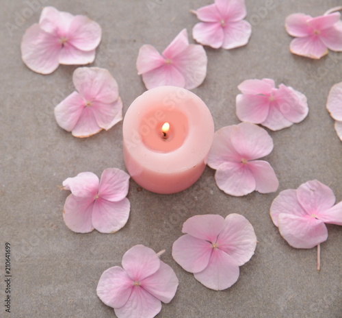 Aluminium Spa Many Pink hydrangea petals with candle on gray background