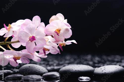 Aluminium Spa branch orchid on black stones reflection