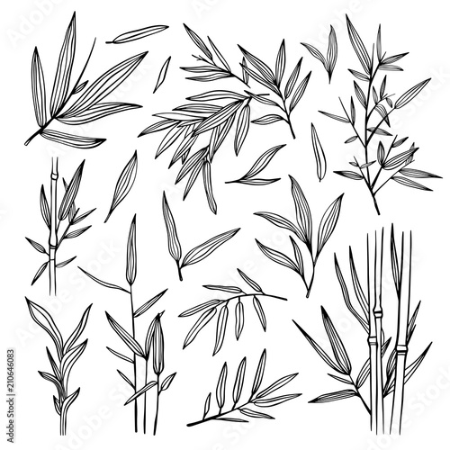 Bamboo black outline illustrations. Bamboo leaves tree set. Botanical hand drawn collection