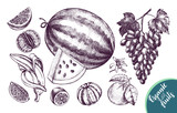 Ink hand drawn set of fruits - watermelon, grapes, banana, tangerine. harvest elements collection with brush calligraphy style lettering. Vector illustration. - 210647456