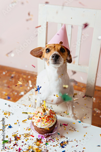 Cute dog with a party hat celebrating her birthday, confetti falling