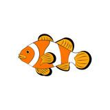 Amphiprion ocellaris clownfish