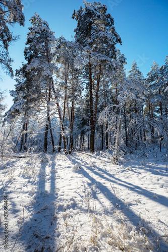 Canvas Winterlandschap Winter forest