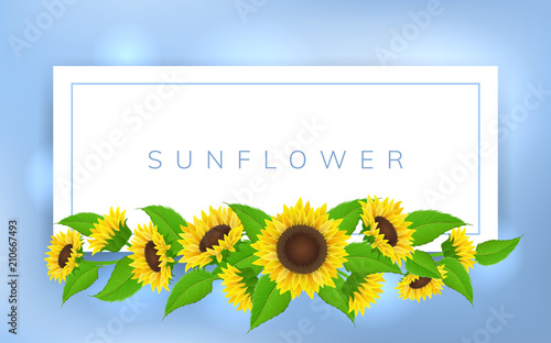 Horizontal banner frame with yellow sunflower and green leaf. Vector illustration for summer and floral design background