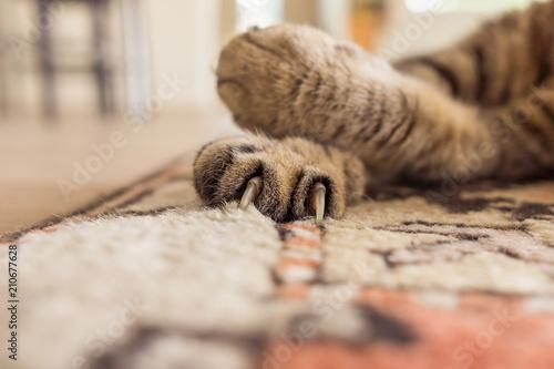 chat allongé sur le tapis - 210677628