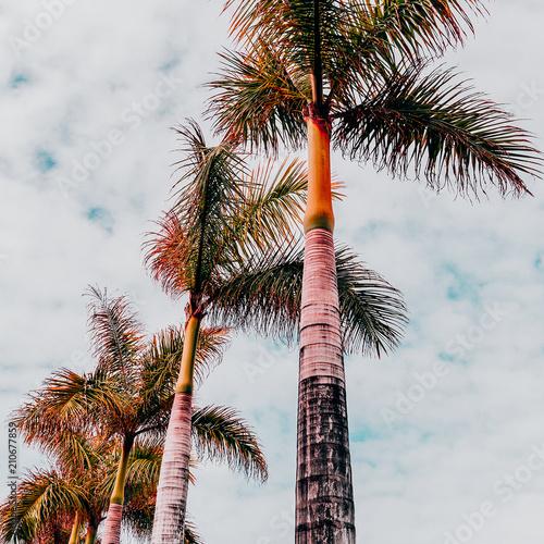 Tropical beach fashion mood. Palm. Canary island - 210677859
