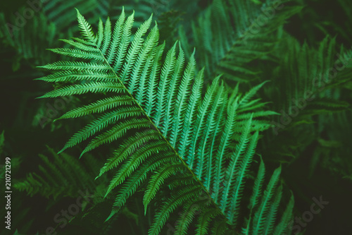 Closeup macro of fern green bush leaves and branches toned with retro vintage filters. Textured natural green background. Hipster style wallpaper.