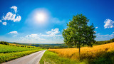 Landscape in summer with bright sun and golden cornfield - 210724609