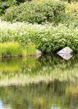 Beautiful pond in the garden. Water is reflecting the colorful grass and flowers and bushes. - 210728457