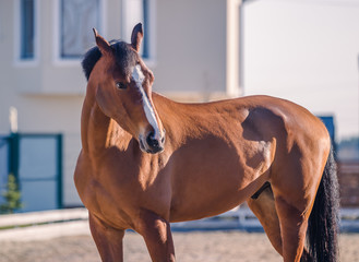 A nestling stallion posing for a portrait on a sunny day
