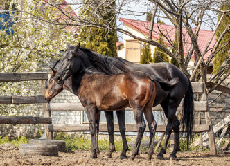 A mare with her foal hugs in the sun