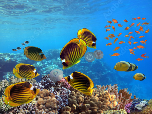 Foto Murales Photo of a tropical Fish on a coral reef