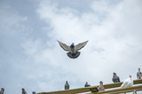 pigeon flying - 210785805