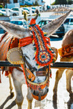Close up of colorful decorated donkeys famous as Burro-taxi waiting for passengers in Mijas, a major tourist attraction. Andalusia, Spain