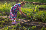 Woman watering the garden with a hose - 210790242
