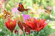 Schmetterling 443