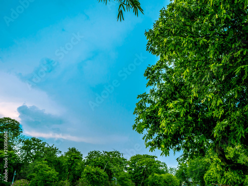 Fotobehang Groene Green Tree and blue sky,cloud sky,nature in the city