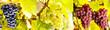 Traubensorten - 210820234