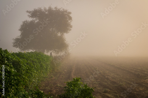 Fototapeta Tree in a foggy field during sunrise