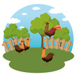 roosters in the farm scene vector illustration design
