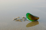 mussel shell. green mussels on a sandy beach - 210846838