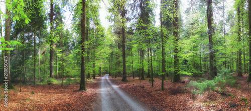 Waldweg durch sonnigen Buchenwald mit frischen grünen Blättern im Frühling - 210850413