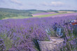 Basket with lavender and glasses with wine on the background of hilly lavender and other fields.