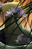 Allium schoenoprasum Erba cipollina Schnittlauch ثوم معمر Ciboulette Luk vlasac Άλλιον Cebolla de hoja το σχοινόπρασον Chives Cebollino - 210856458