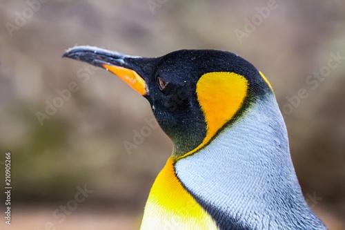 Aluminium Pinguin penguin