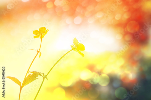 Fotobehang Geel bright yellow flowers buttercups