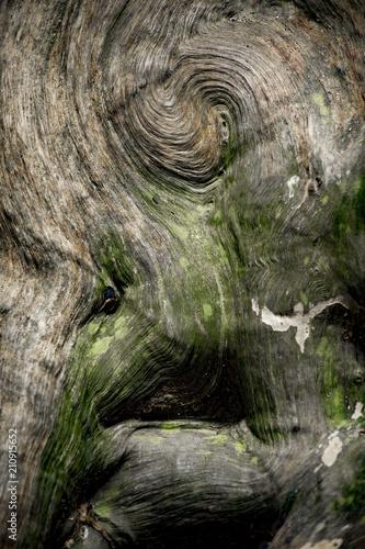 tronc d'arbre - 210915652