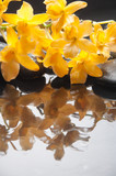 Wet black stones and lying on branch yellow orchid
