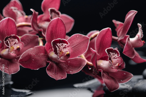 Aluminium Spa branch red orchid on black stones reflection