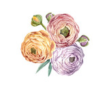 Watercolor floral composition - 210954890