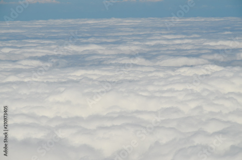 High Clouds over Pine Cone Trees Forest - 210973405