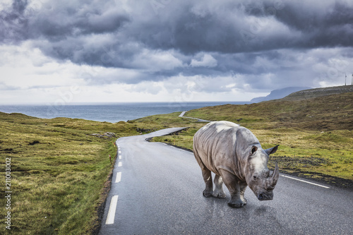Plexiglas Neushoorn rhinoceros on lonely road