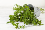 Oregano plant in tilted tin bucket on white table - 211003222