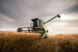 Harvesting of wheat field with combine - 211010250