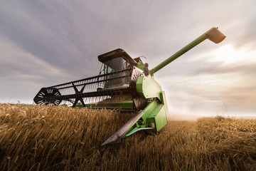 Harvesting of wheat field with combine