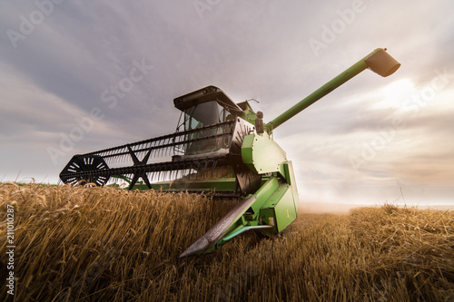 Harvesting of wheat field with combine - 211010287