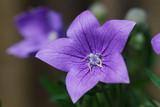 fleurs - 211029214