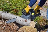 a pair of hands with glove and partial view of arms using a cordless electric chainsaw to cut a medium sized tree trunk on the ground on a forest clearing - 211031022