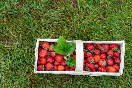 strawberries in the basket - 211059620